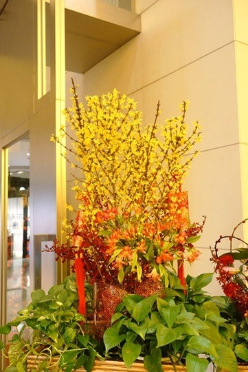 Cesta de flores de ciruelo amarillo. (China Gaze)