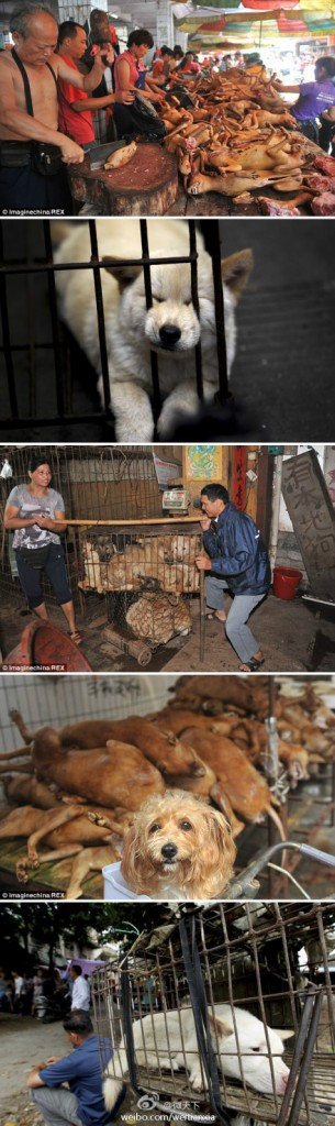 dog-meat-festival-2-305x1024